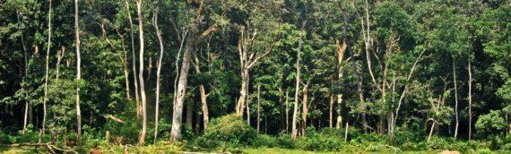 60 JAHREN DIKTATUR UND 200 JAHREN KRIEGEN, SKLAVEREI UND SCHMUGGEL: WILLKOMMEN IN KONGO